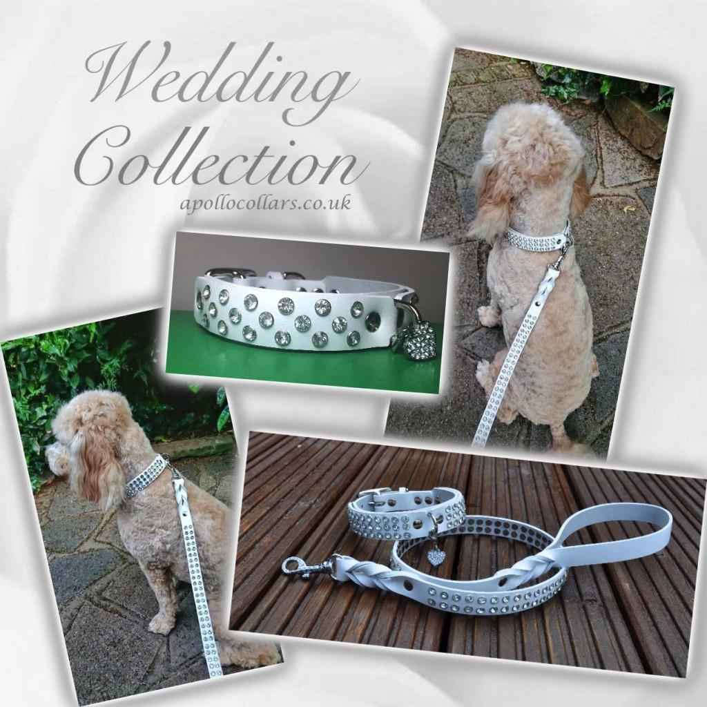 Apollo Collars Wedding Collection
